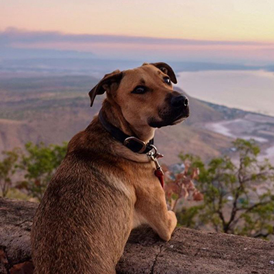 What's it really like to travel Australia with Dogs?
