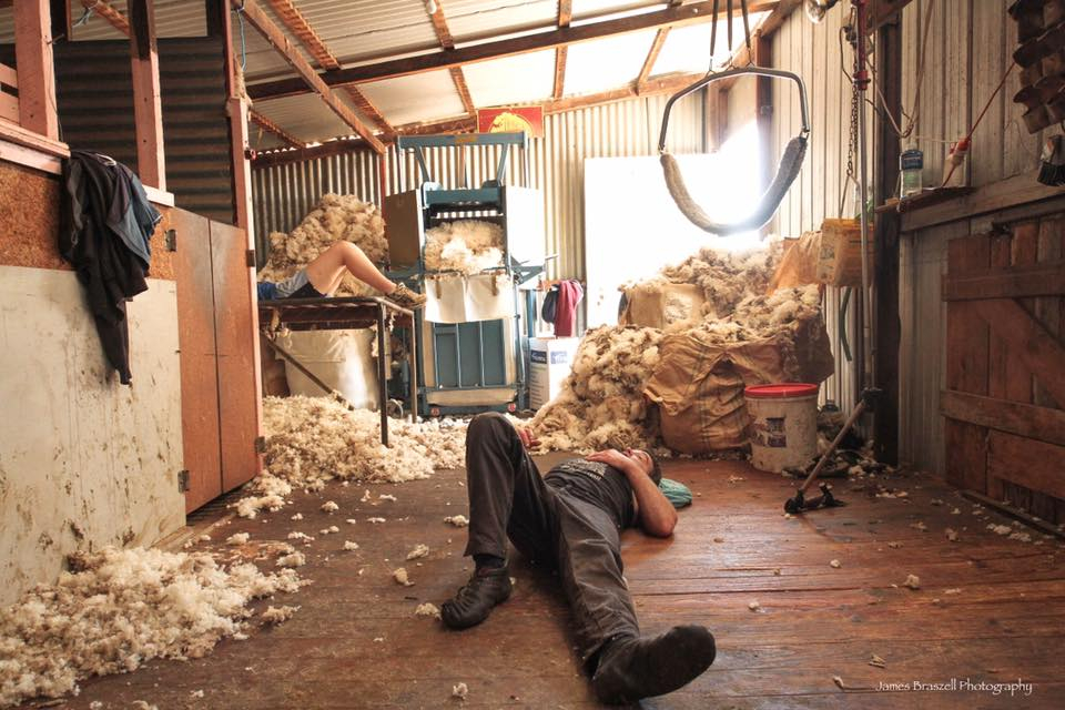 Shearers on the floor