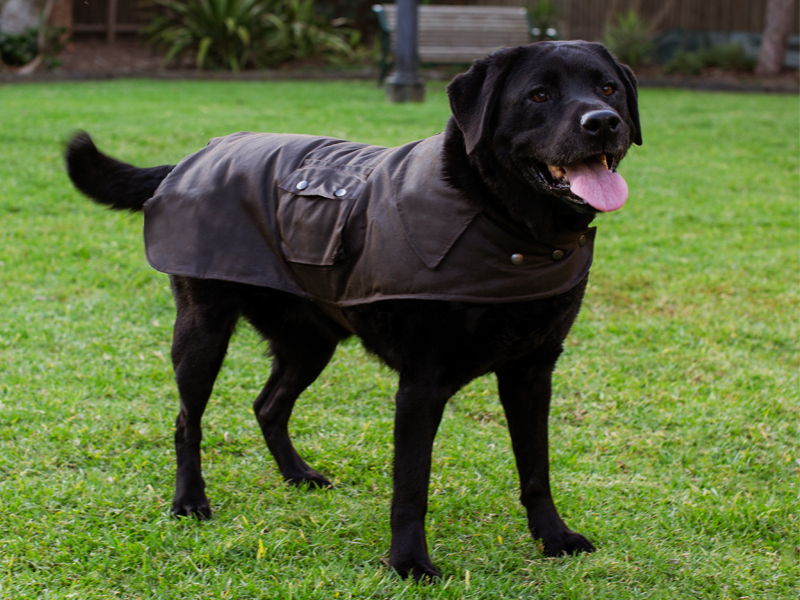 oilskin dog coat