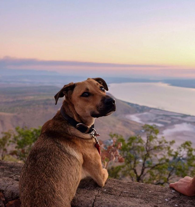 Travel Australia with Dogs